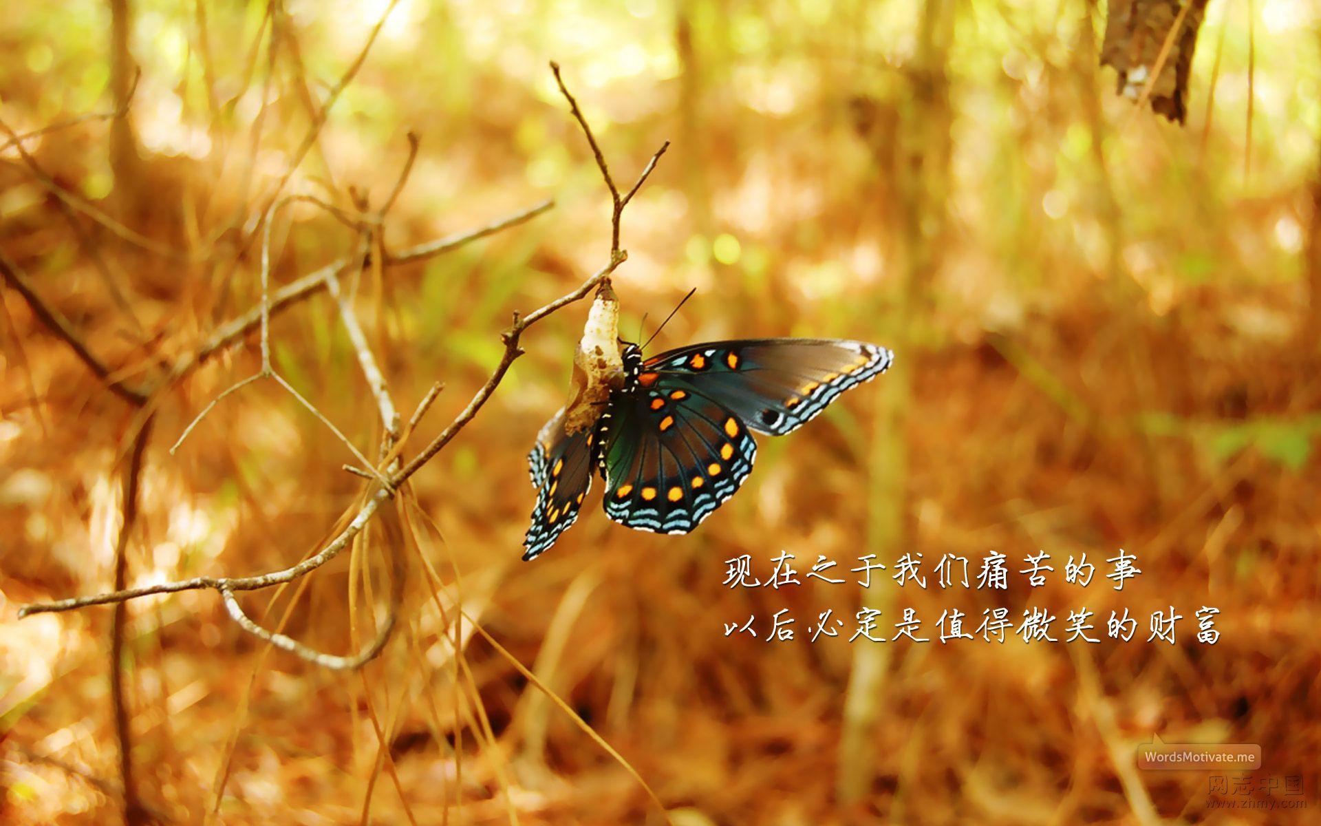 励志壁纸精选 (1).jpg
