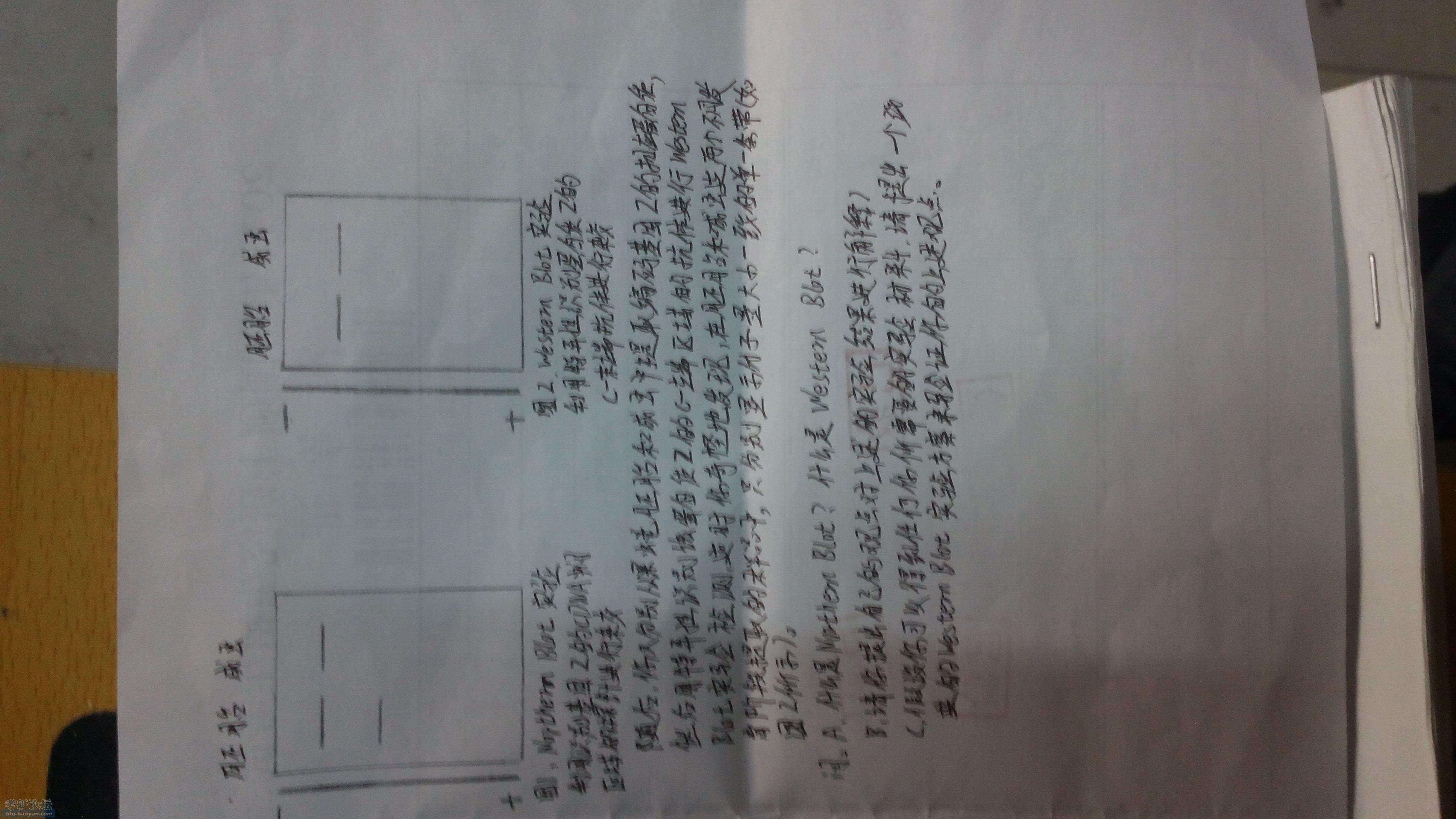 IMG_20141228_164518.jpg